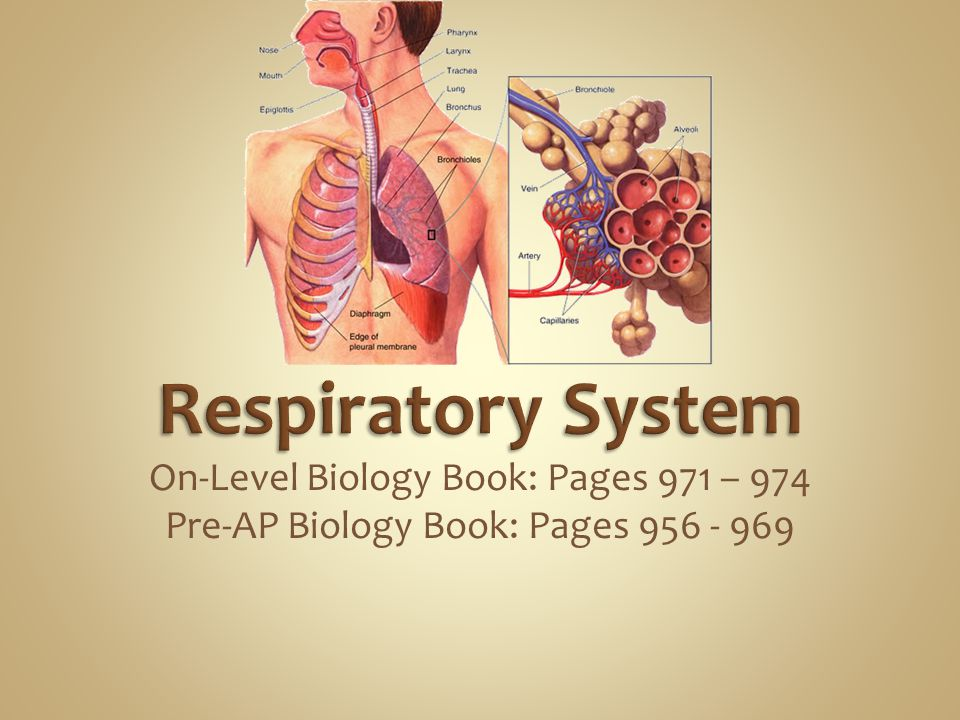 Respiratory System On-Level Biology Book: Pages 971 – 974