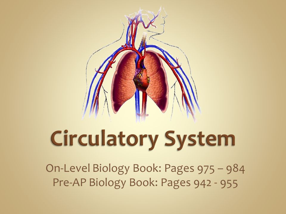 Circulatory System On-Level Biology Book: Pages 975 – 984