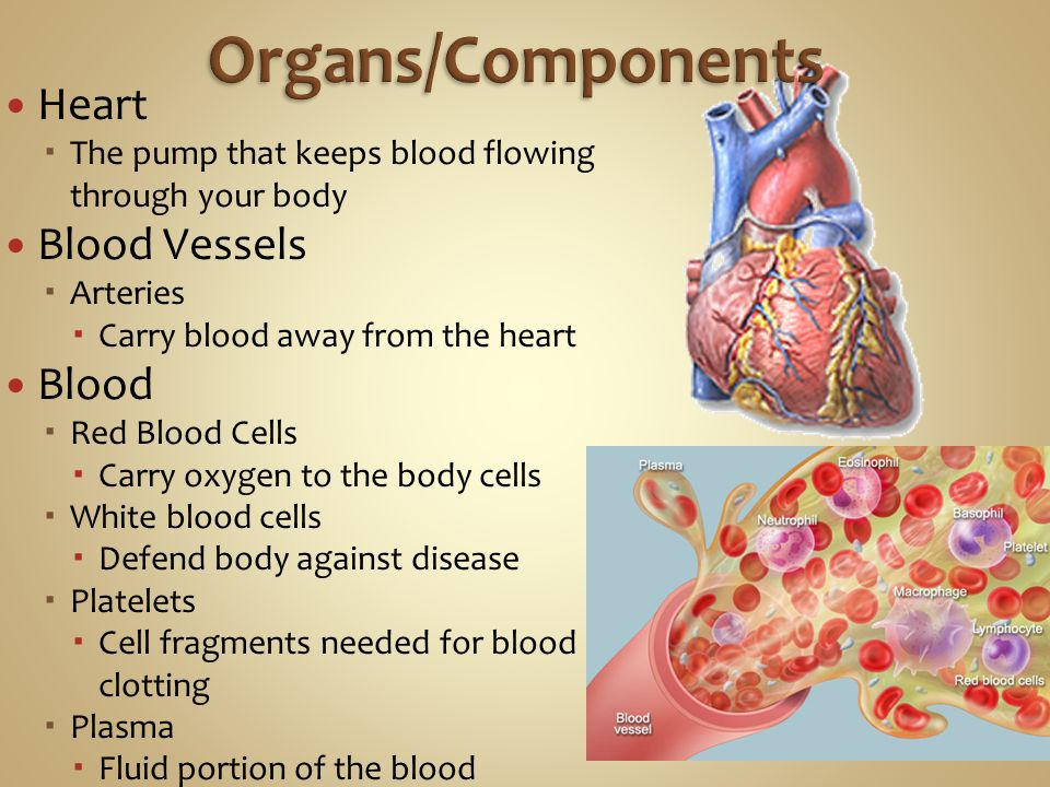 Organs/Components Heart Blood Vessels Blood