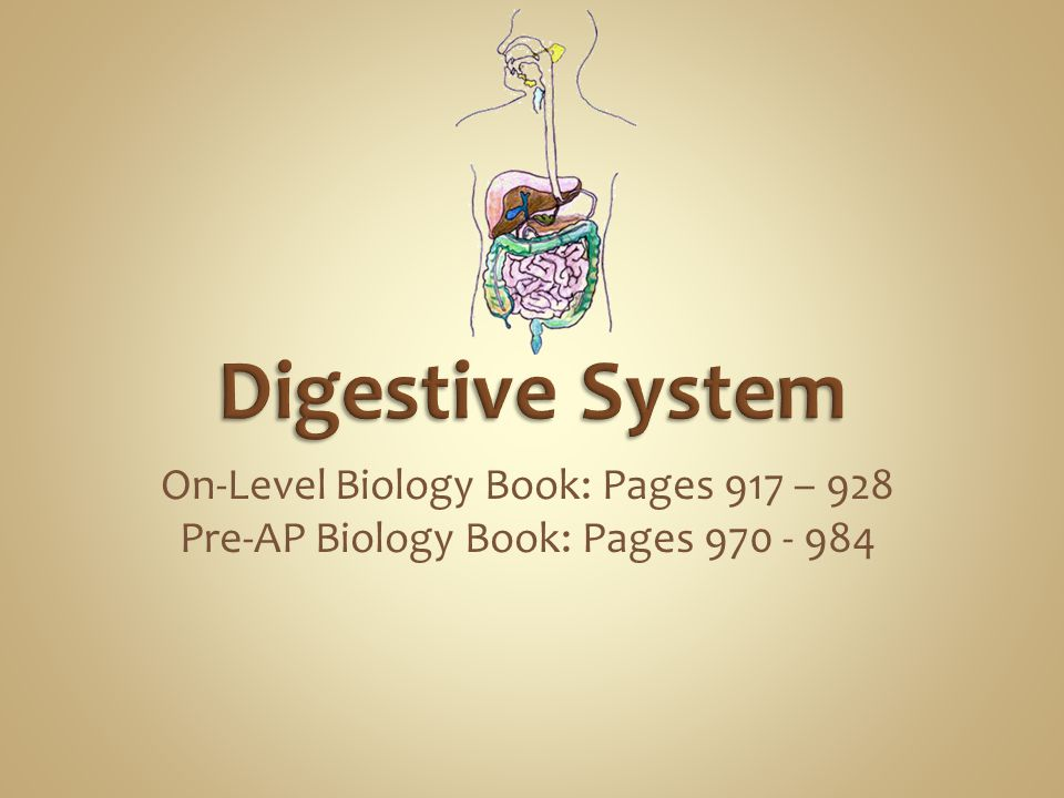 Digestive System On-Level Biology Book: Pages 917 – 928