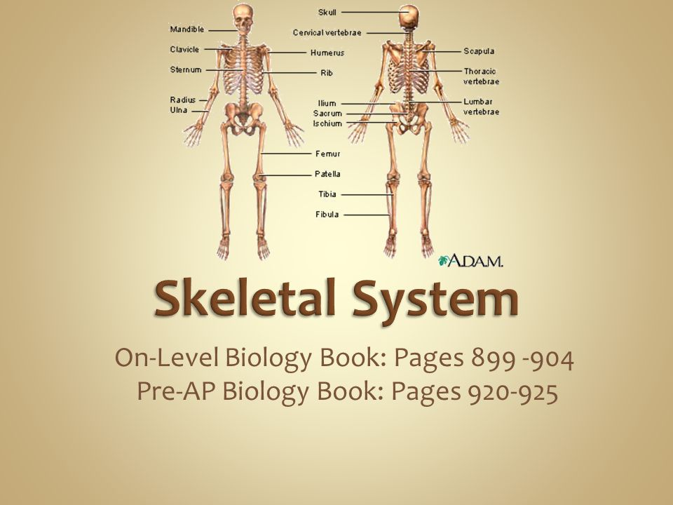 Skeletal System On-Level Biology Book: Pages 899 -904