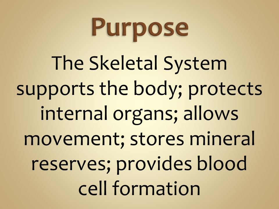 Purpose The Skeletal System supports the body; protects internal organs; allows movement; stores mineral reserves; provides blood cell formation.