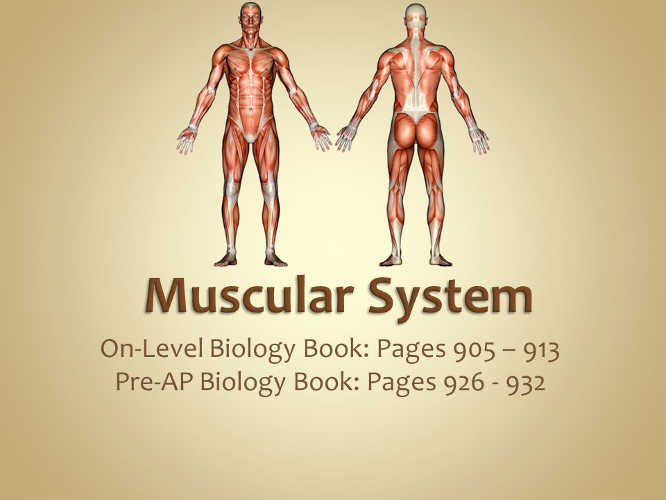 Muscular System On-Level Biology Book: Pages 905 – 913