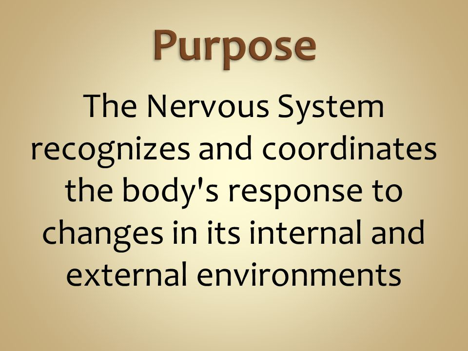 Purpose The Nervous System recognizes and coordinates the body s response to changes in its internal and external environments.