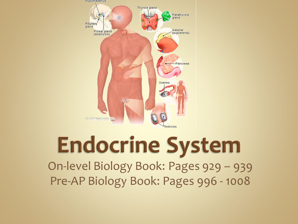 Endocrine System On-level Biology Book: Pages 929 – 939