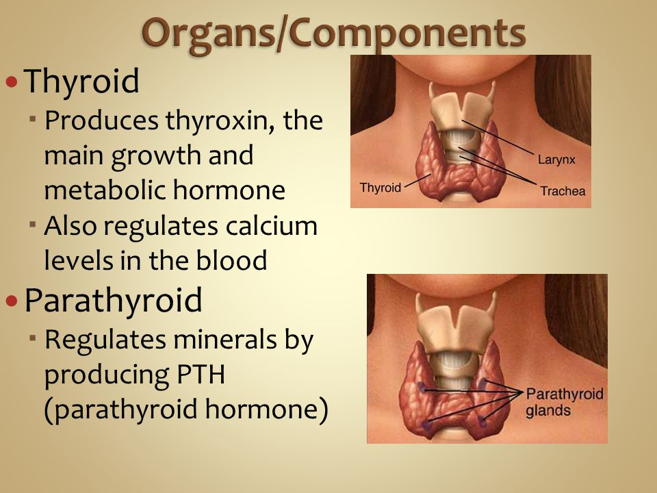 Organs/Components Thyroid Parathyroid
