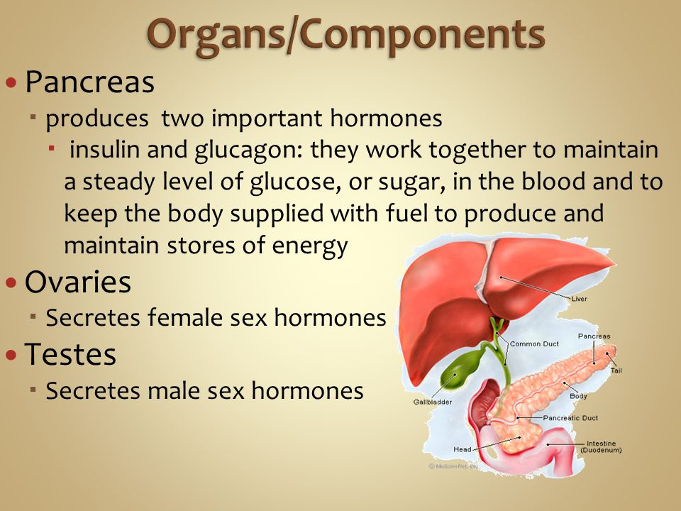 Organs/Components Pancreas Ovaries Testes