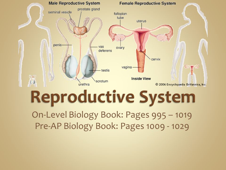 Reproductive System On-Level Biology Book: Pages 995 – 1019