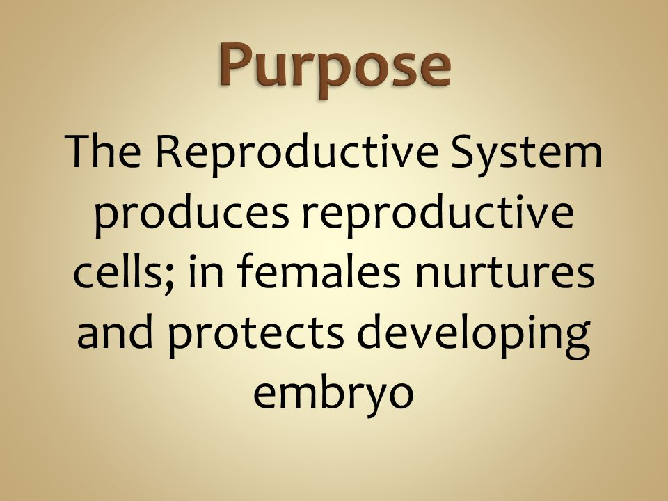 Purpose The Reproductive System produces reproductive cells; in females nurtures and protects developing embryo.