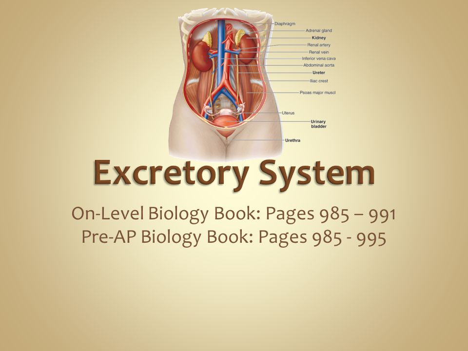 Excretory System On-Level Biology Book: Pages 985 – 991