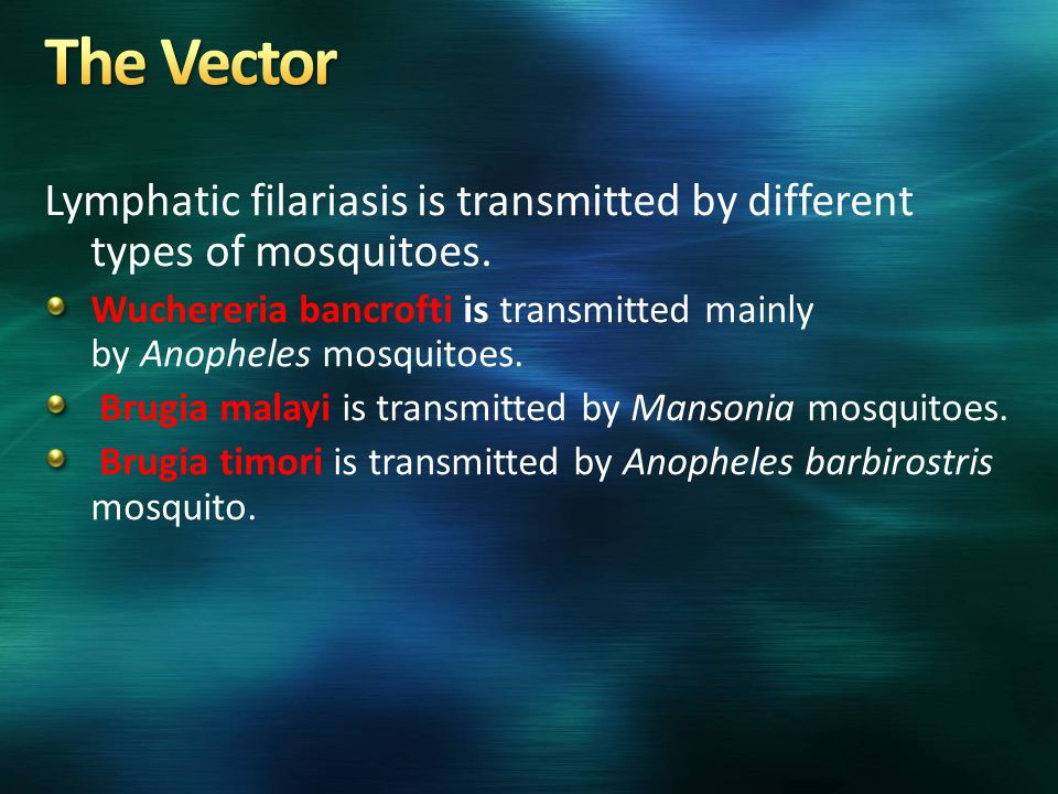 The Vector Lymphatic filariasis is transmitted by different types of mosquitoes.