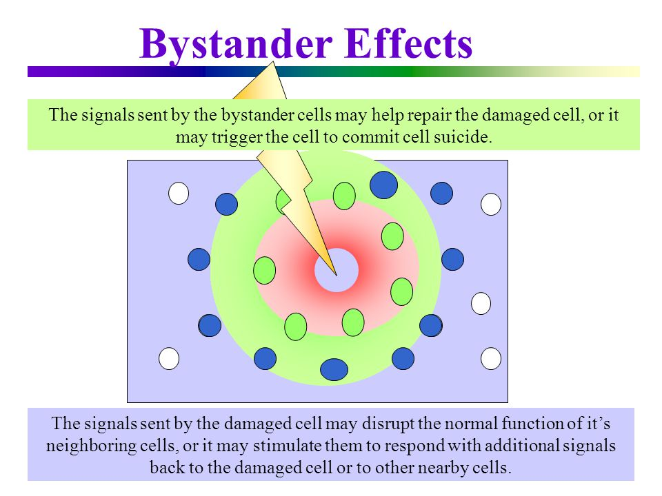 Bystander Effects The signals sent by the bystander cells may help repair the damaged cell, or it may trigger the cell to commit cell suicide.