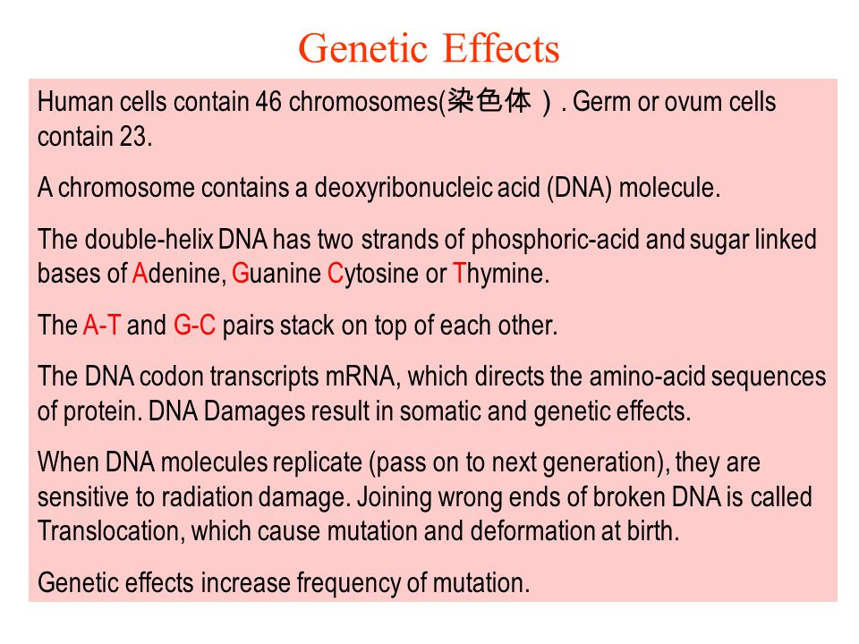 Genetic Effects Human cells contain 46 chromosomes(染色体). Germ or ovum cells contain 23.