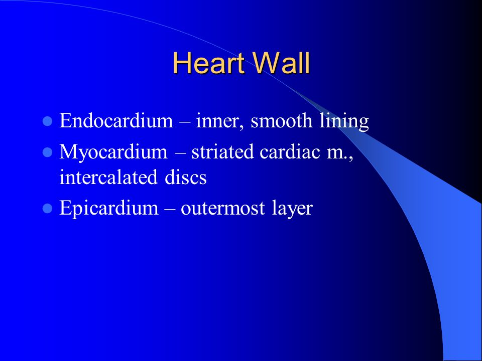 Heart Wall Endocardium – inner, smooth lining