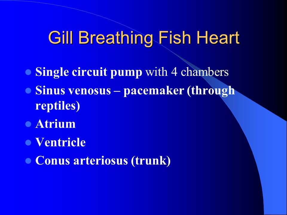 Gill Breathing Fish Heart