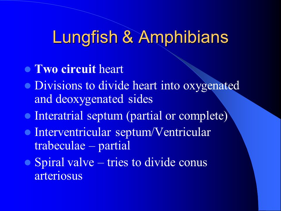 Lungfish & Amphibians Two circuit heart