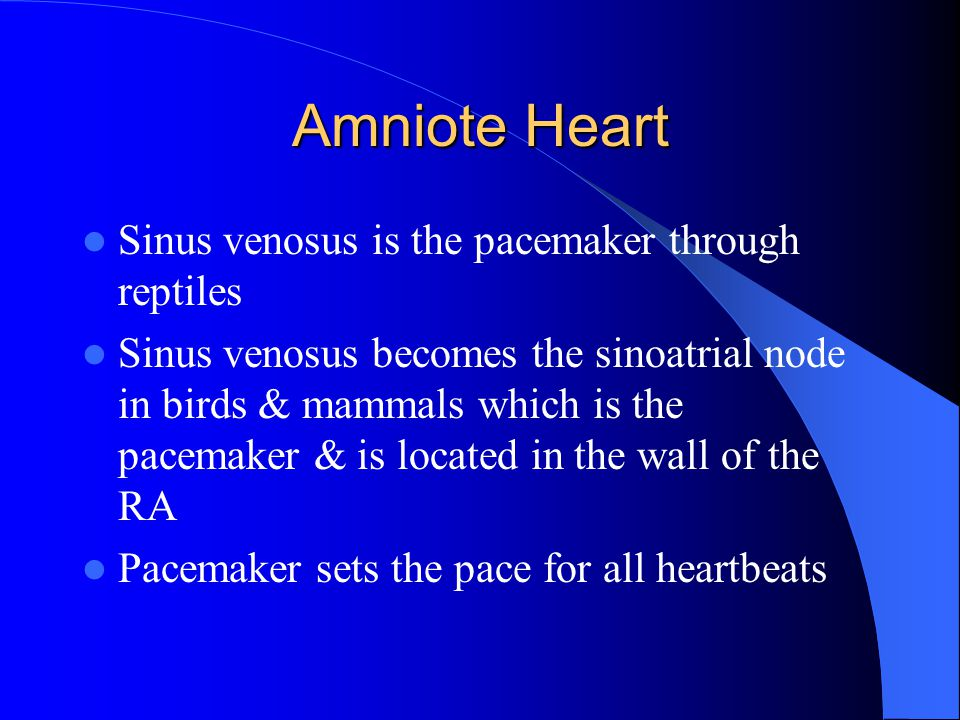 Amniote Heart Sinus venosus is the pacemaker through reptiles
