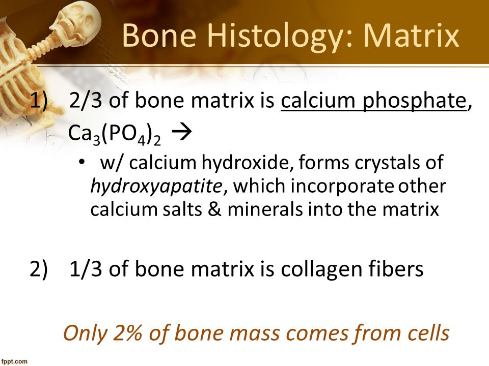 Bone Histology: Matrix