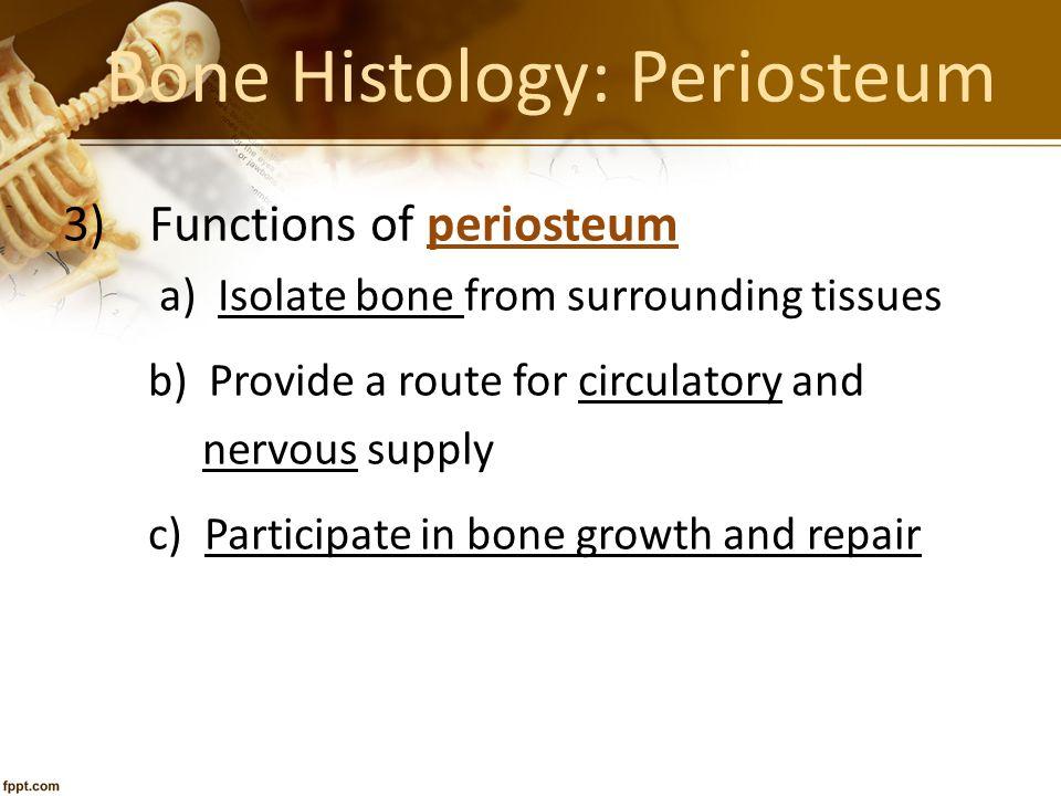 Bone Histology: Periosteum