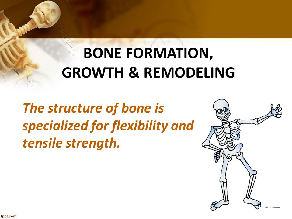 Bone Formation, Growth & Remodeling