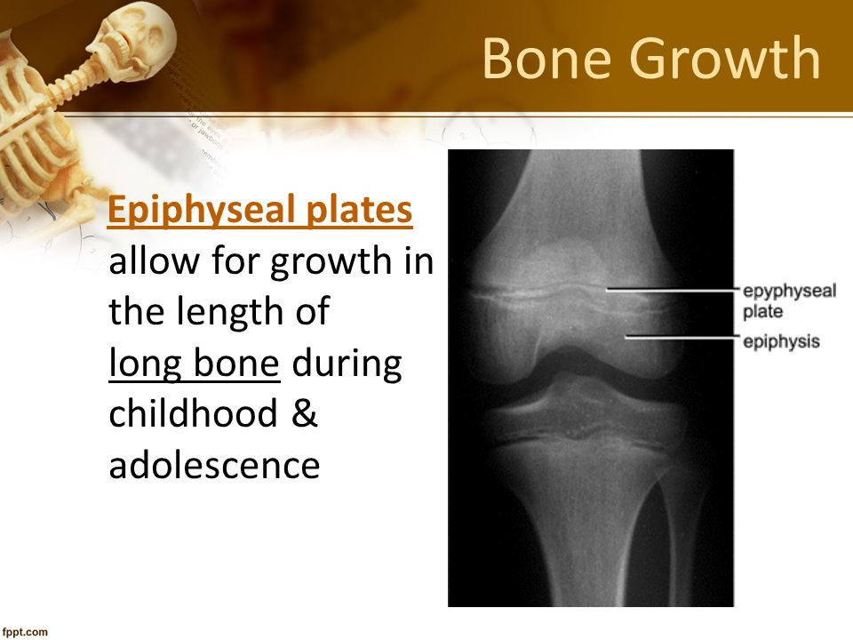 Bone Growth allow for growth in the length of long bone during