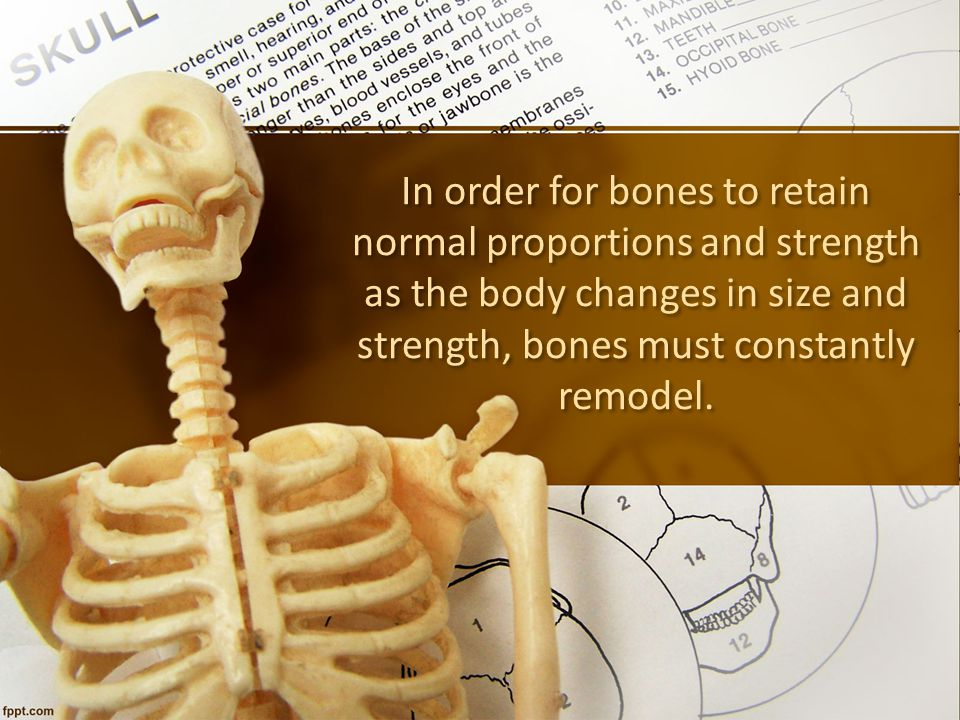 In order for bones to retain normal proportions and strength as the body changes in size and strength, bones must constantly remodel.
