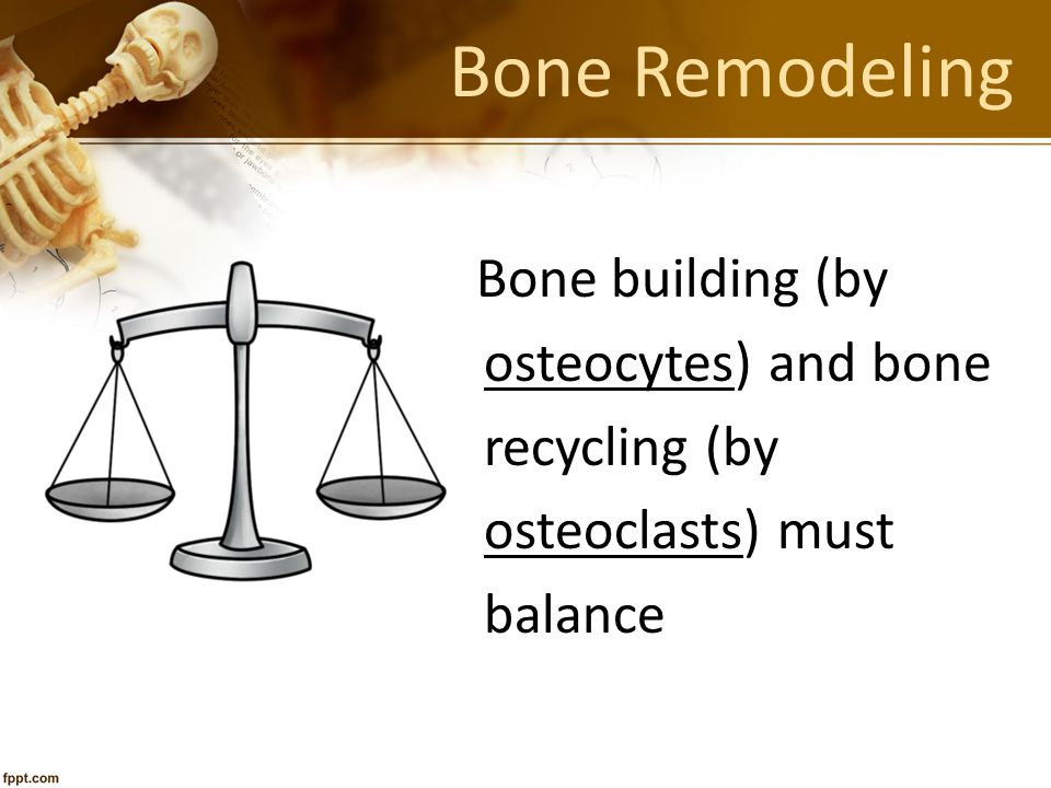 Bone Remodeling osteocytes) and bone recycling (by osteoclasts) must