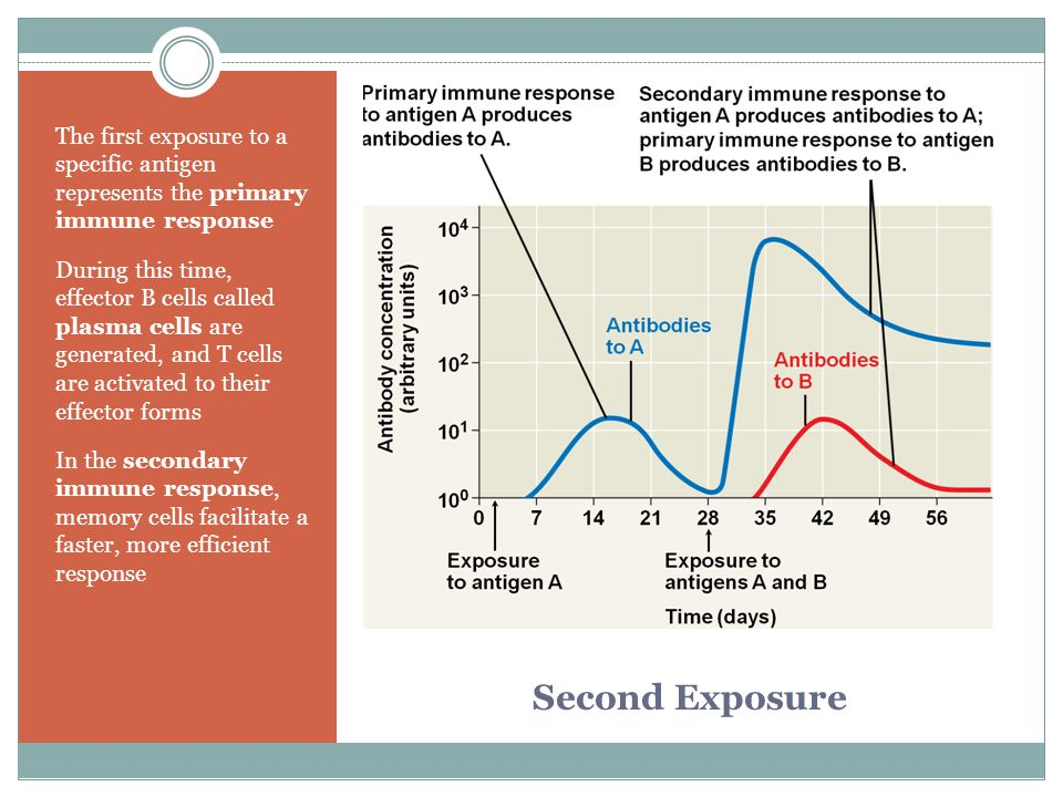The first exposure to a specific antigen represents the primary immune response
