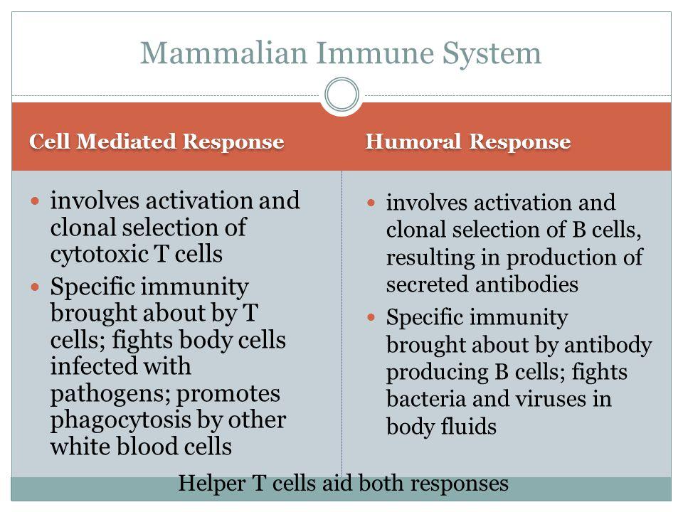 Mammalian Immune System