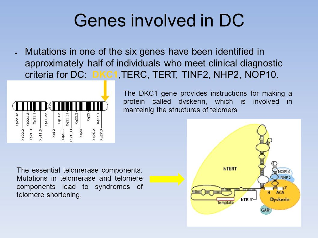 Genes involved in DC