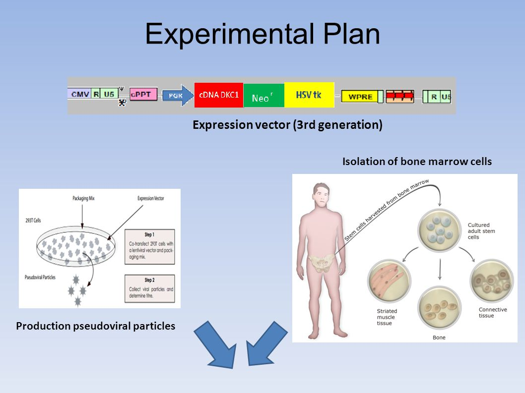 Experimental Plan Expression vector (3rd generation)