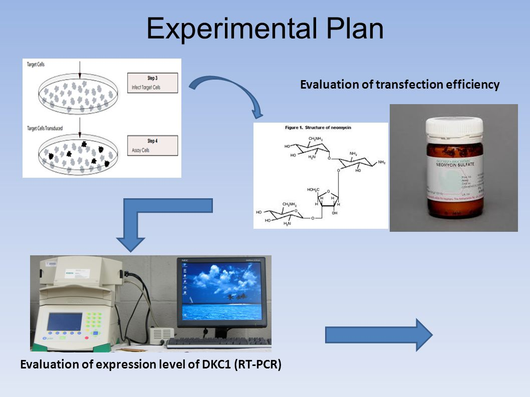 Experimental Plan Evaluation of transfection efficiency