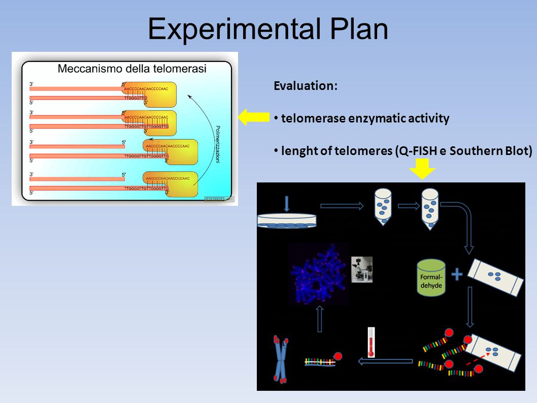 Experimental Plan Evaluation: telomerase enzymatic activity