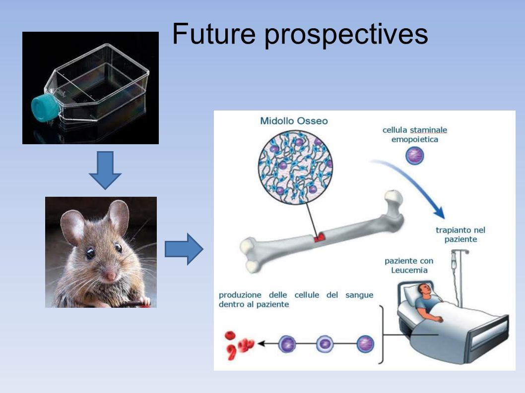 Future prospectives