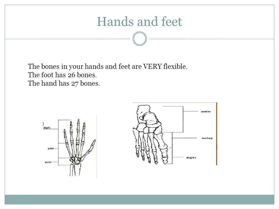 Hands and feet The bones in your hands and feet are VERY flexible.