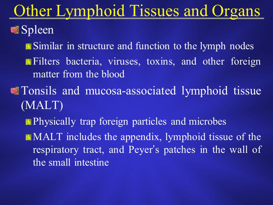 Other Lymphoid Tissues and Organs