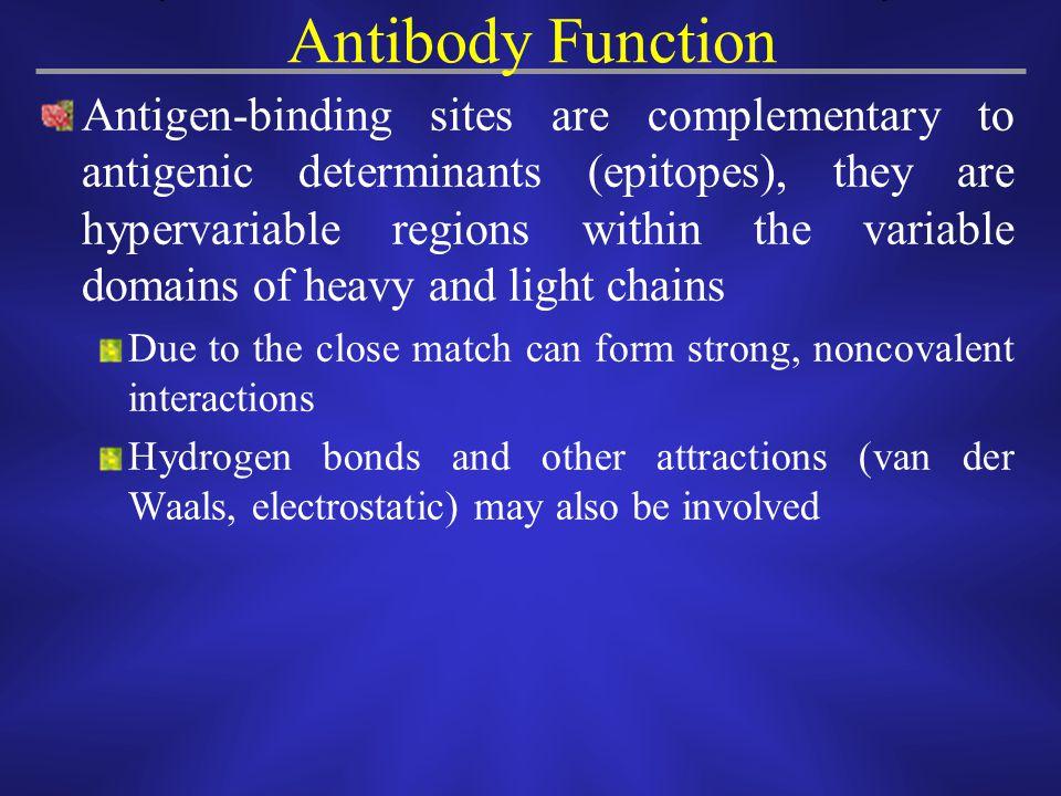 Antibody Function