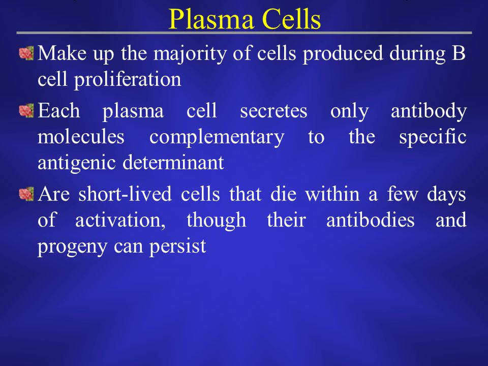 Plasma Cells Make up the majority of cells produced during B cell proliferation.