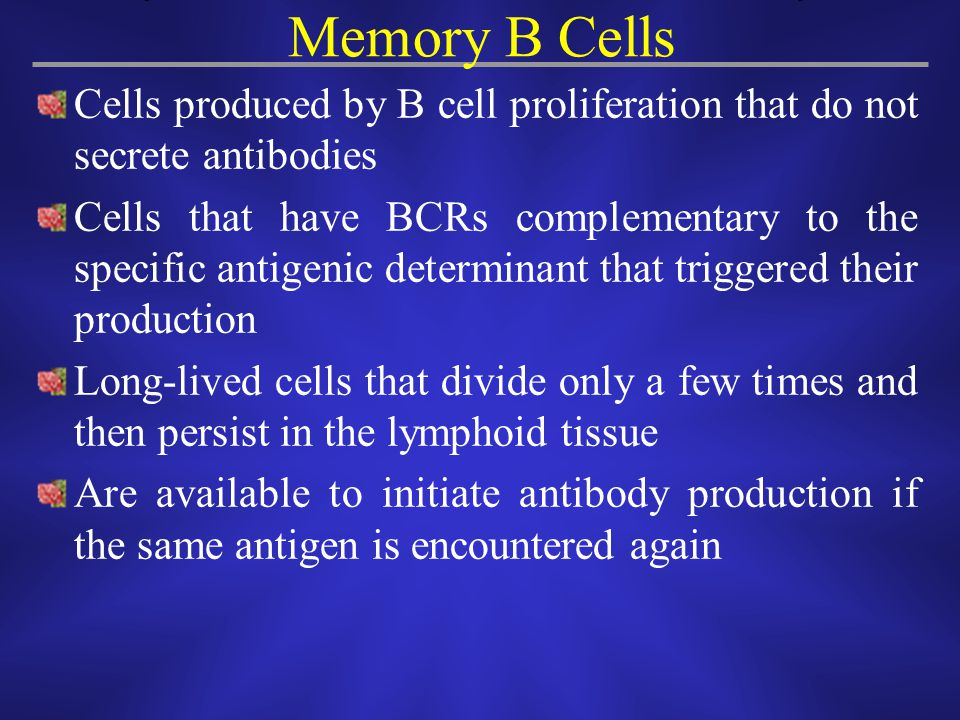 Memory B Cells Cells produced by B cell proliferation that do not secrete antibodies.