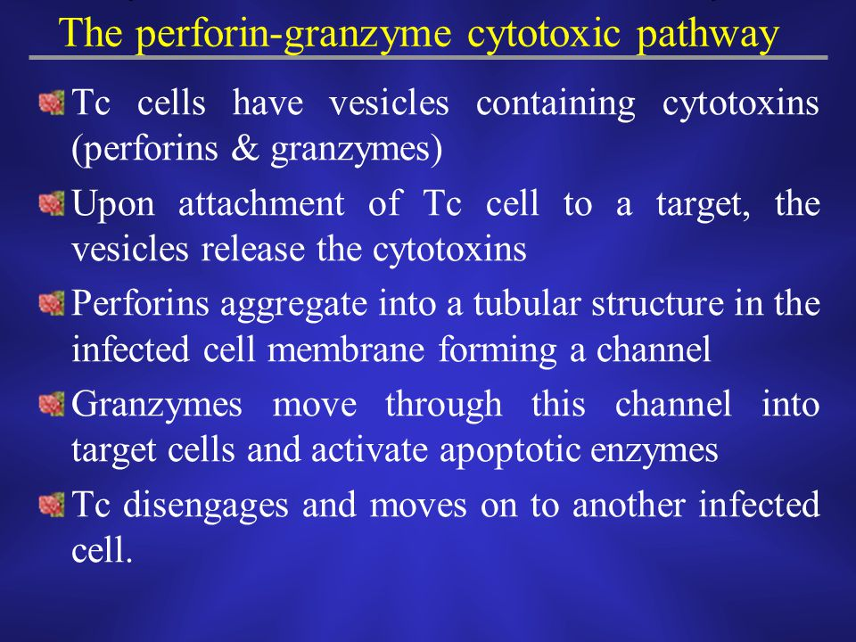 The perforin-granzyme cytotoxic pathway