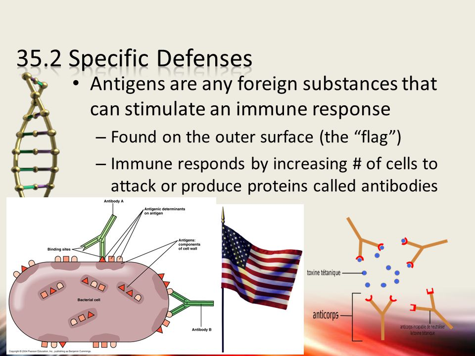 35.2 Specific Defenses Antigens are any foreign substances that can stimulate an immune response. Found on the outer surface (the flag )