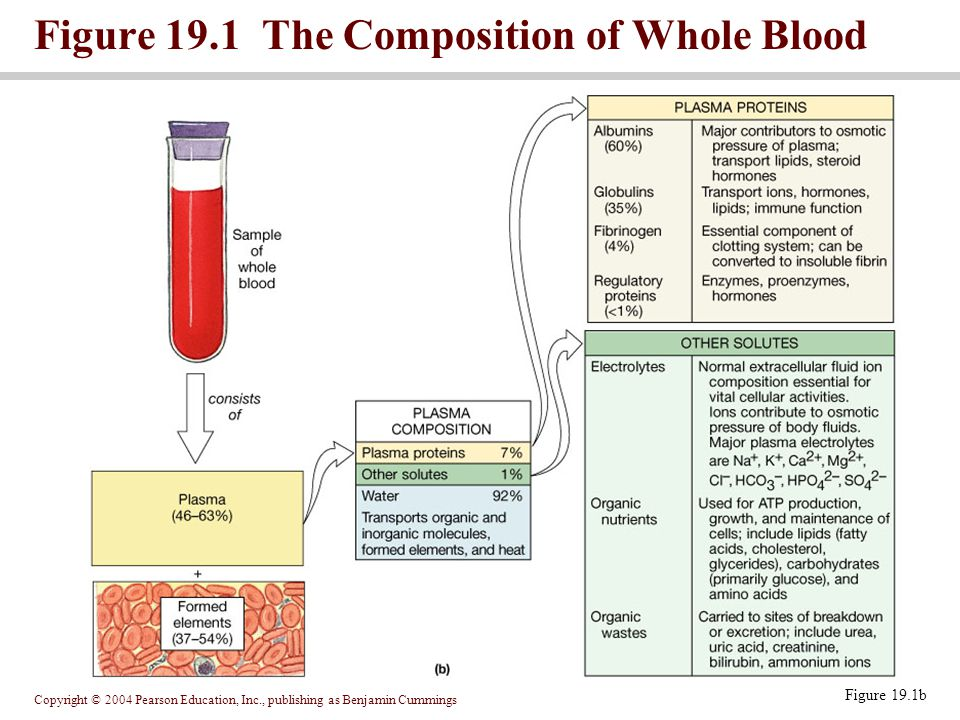 Figure 19.1 The Composition of Whole Blood