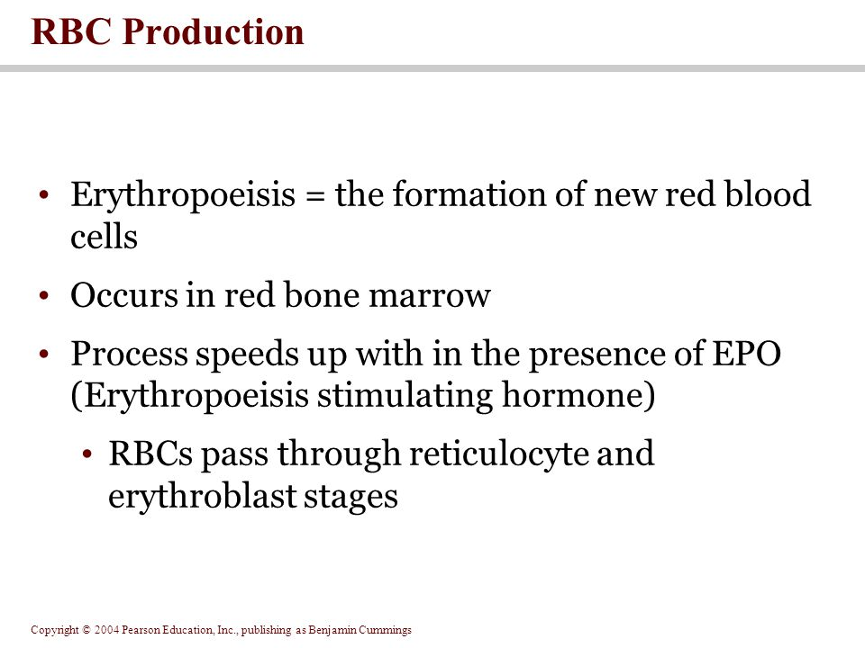 RBC Production Erythropoeisis = the formation of new red blood cells