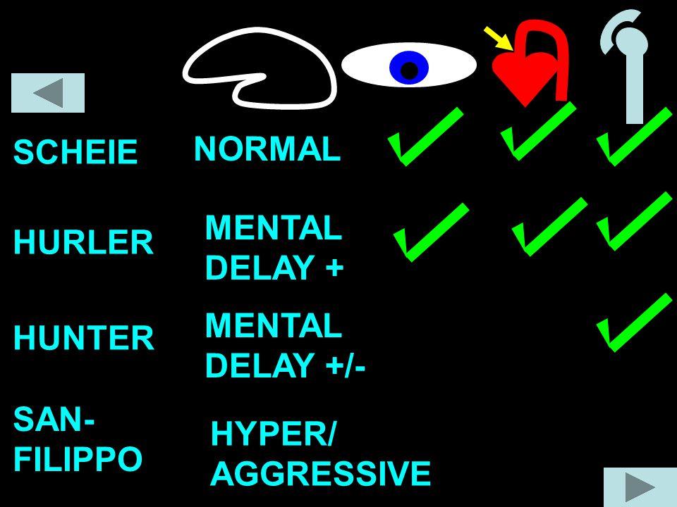 SCHEIE NORMAL MENTAL DELAY + HURLER MENTAL DELAY +/- HUNTER SAN- FILIPPO HYPER/ AGGRESSIVE