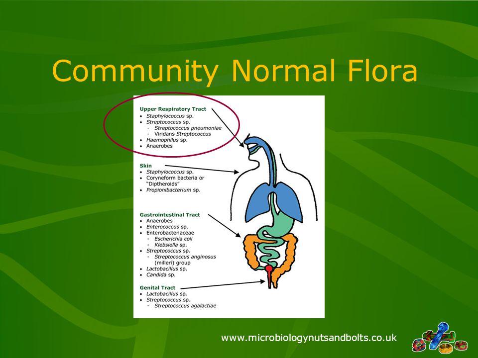 Community Normal Flora