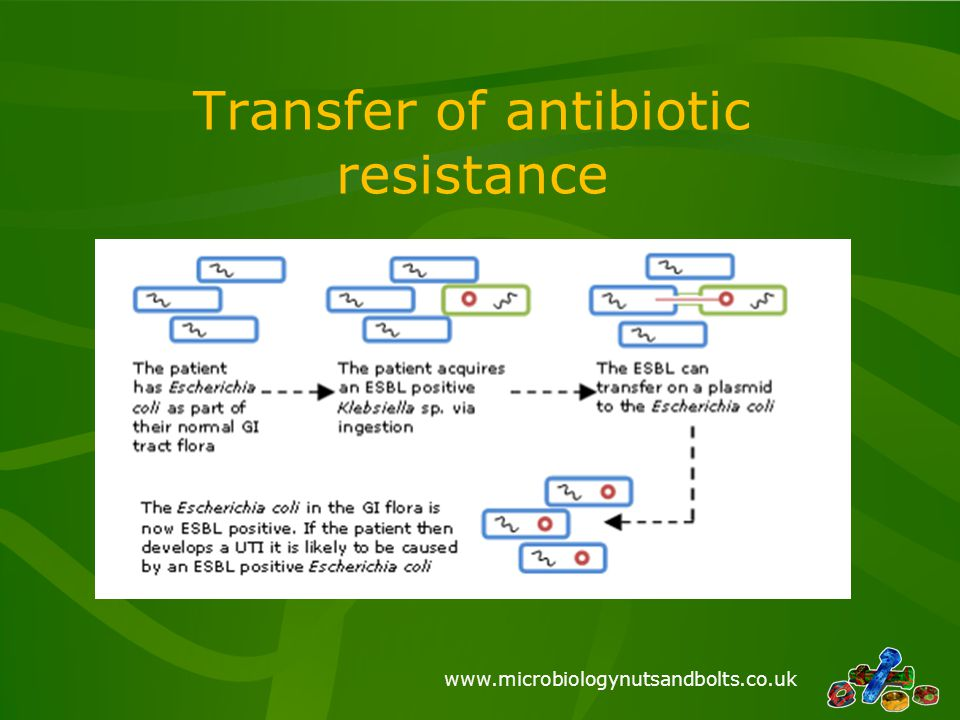 Transfer of antibiotic resistance