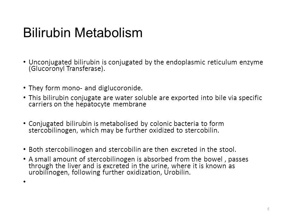 Bilirubin Metabolism Unconjugated bilirubin is conjugated by the endoplasmic reticulum enzyme (Glucoronyl Transferase).