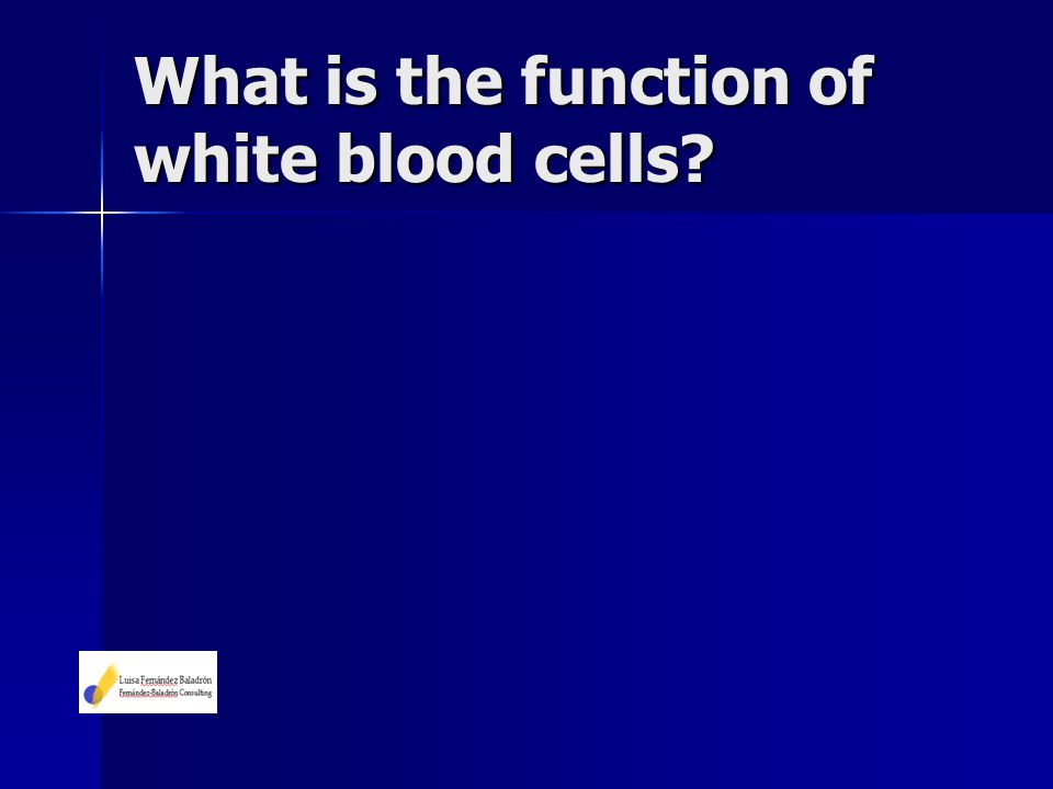 What is the function of white blood cells