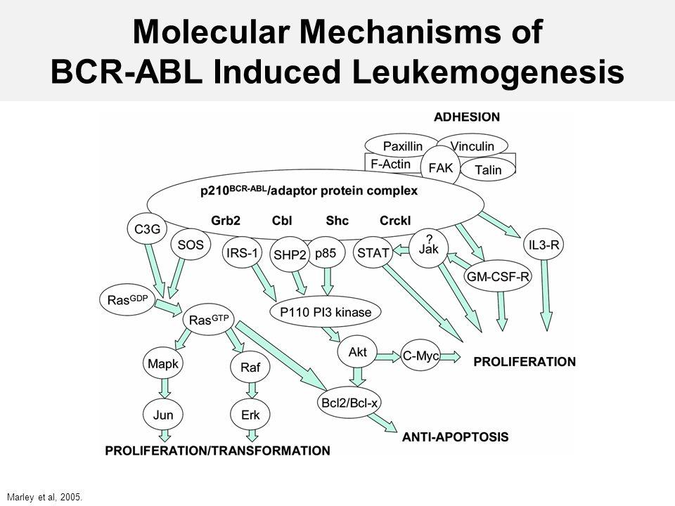 Molecular Mechanisms of BCR-ABL Induced Leukemogenesis