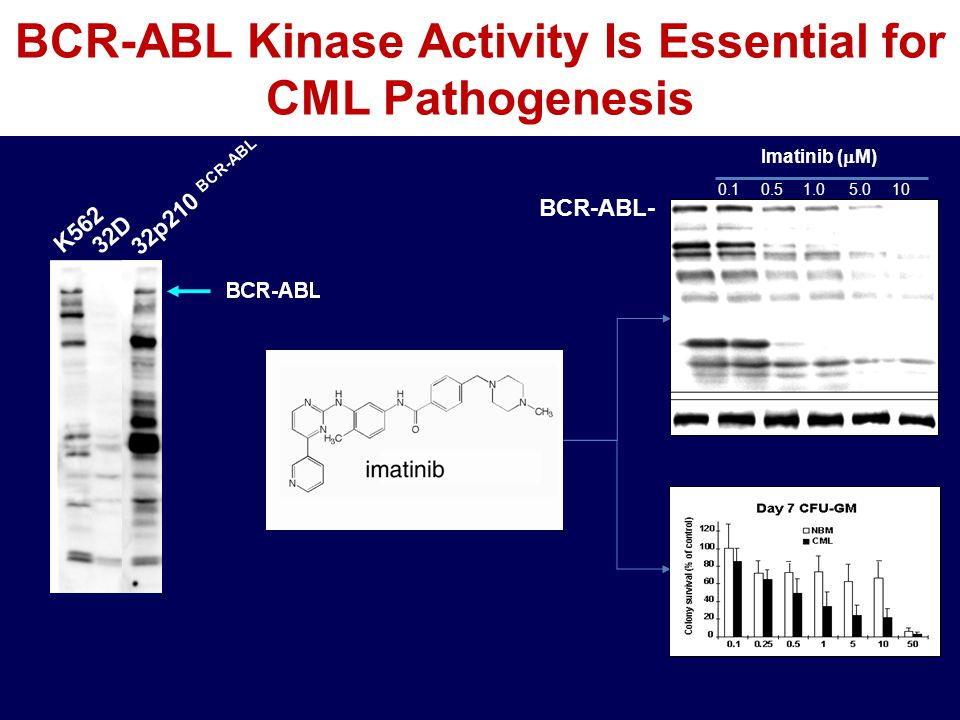 BCR-ABL Kinase Activity Is Essential for CML Pathogenesis